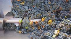 Corkscrew crusher destemmer in winemaking Stock Footage