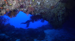 Rainbow hanging soft coral swimming on deep water wall and cavern tunnel, - stock footage