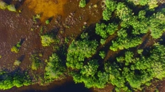 Overhead view of Florida Everglades vegetation Stock Footage