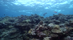 Ocean scenery slowly moving up the wall, on seaward wall, HD, UP32542 Stock Footage