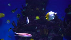 Many different fishes floating in a huge water tank against blue background. 4K Stock Footage