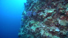 Ocean scenery gentle current shows feeding soft corals becoming more sparse as Stock Footage