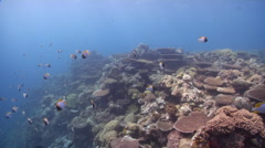 Ocean scenery on shallow coral reef, HD, UP32600 Stock Footage