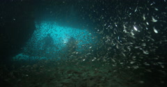 Photographer and model taking images on large cavern full of baitfish with Stock Footage
