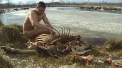 The Evolution of the Homo Sapiens, Naked guy feeding on moose carcase - stock footage