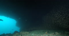 Ocean scenery lots of predators patrolling the entrance of a large cave. - stock footage
