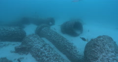 Concrete pipe field well encrusted and fairly fishy, underwater, 4K UltraHD, Stock Footage