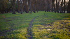 Beautiful path leading in the wood Stock Footage