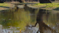 Trees without leaves are reflected in the lake Stock Footage