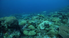 Ocean scenery climax community of diverse and healthy hard corals complete with - stock footage