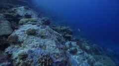 Ocean scenery climax community of diverse and healthy hard corals, on pristine Stock Footage
