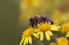 Pollination - stock photo