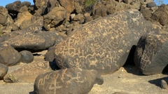 Rocks covered with petroglyphs Stock Footage