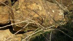 Petroglyphs carved into desert boulders Stock Footage