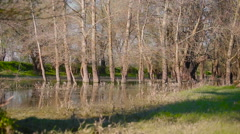 Danube left the coast and has flooded a small site of the wood Stock Footage