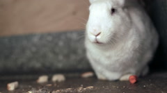 White rabbit eat the carrot in his wooden box Stock Footage