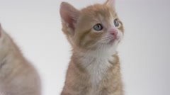 Cute Kitten on White Background Stock Footage