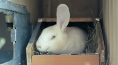 Big adult rabbit went back to his box Stock Footage