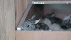 Little two-week rabbits in his wooden box Stock Footage