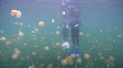 Ocean scenery couple snorkelling with jellies, on landlocked and isolated Stock Footage