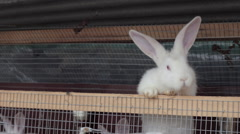 White rabbit climb up the cage Stock Footage