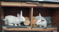 Two young rabbits in the cages Stock Footage
