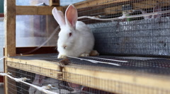White rabbit sitting on cages with other bunnies Stock Footage