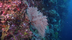 Ocean scenery camera slowly shows both side of the fan, on seaward wall, HD, Stock Footage