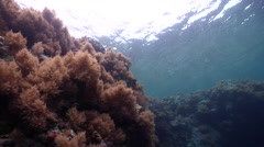 Ocean scenery swim stops at anemone, very shallow reef and surface, on very Stock Footage