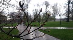 A fresh spring twig under the rain in Kensington Gardens, London Stock Footage