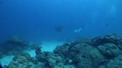 Reef manta ray swimming in lagoon entrance channel, Manta alfredi, HD, UP32758 Stock Footage