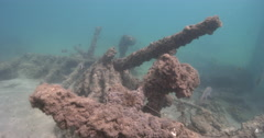 Show most of the divesite at DPI, diverse fish living around mass of pipes. Stock Footage