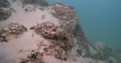 Outgoing tide dumping algae and silt on stonefish helping the camouflage, Stock Footage