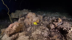 Longnose butterflyfish swimming on deep water wall and cavern tunnel, Forcipiger - stock footage
