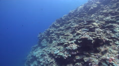 Ocean scenery on semi-protected coral slope, HD, UP32811 Stock Footage