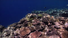 Ocean scenery sunny and crystal clear water, on protected seaward coral garden, Stock Footage
