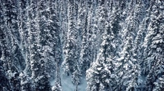 Aerial Frozen Trees In Snowfall Stock Footage