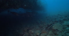 Unidentified common yellow cup corals hiding and schooling on deep historic Stock Footage