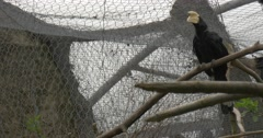 Black Parrot Sits on a Branch of a Dried up Tree Stock Footage