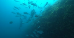 Crimson snapper and divers on deep historic shipwreck. - stock footage