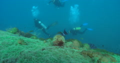 Yellowfin surgeonfish feeding on deep historic shipwreck teaming with marine Stock Footage