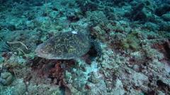 Ocean scenery turtle has satellite tag scar, surge wobbles turtle around, on Stock Footage