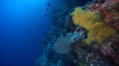 Ocean scenery nice soft and plate corals late in the shot, on protected deep Stock Footage