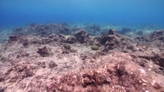 Ocean scenery on stressed coral reef, HD, UP33060 Stock Footage