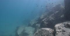 Ocean scenery filmed on snorkel, cormorant cam, lots of small fish fleeing, on Stock Footage