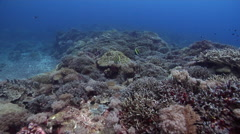 Ocean scenery healthy and diverse hard coral garden in surge, fish lead camera Stock Footage