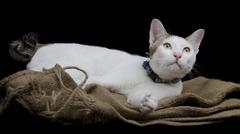Cute cat lay on sackcloth - stock photo