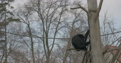 Sad Black-Haired Monkey Sits on Branch Dry Tree Stock Footage