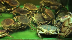 Live crabs in an aquarium in a restaurant in Singapore. Stock Footage