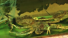 Live crabs in an aquarium in a restaurant in Singapore. - stock footage